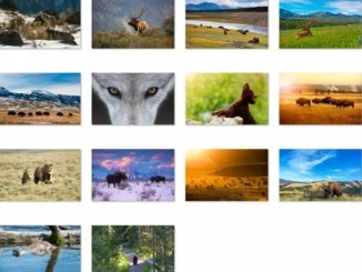animals of yellowstone theme win 10
