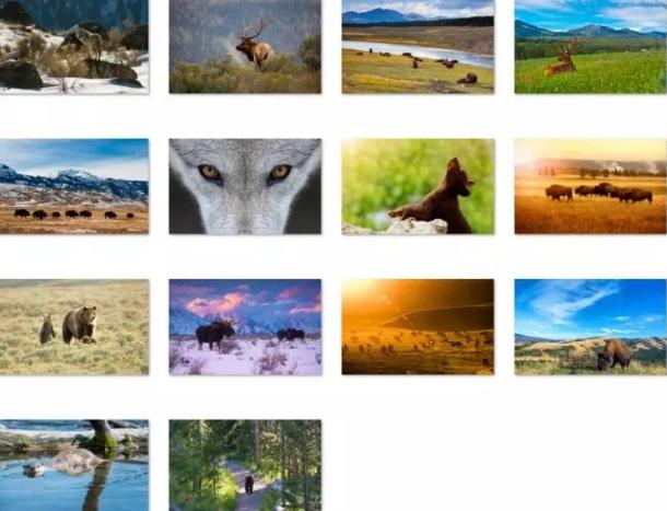 animals of yellowstone theme win 10