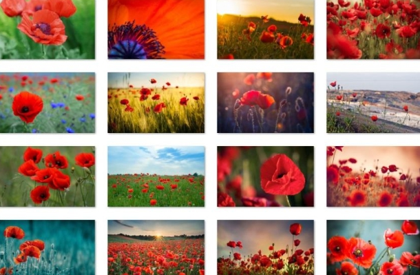 fields of poppies theme for windows 10