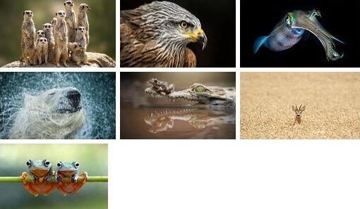 the animal kingdom theme for pc