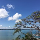 Darwin through the Poinciana trees