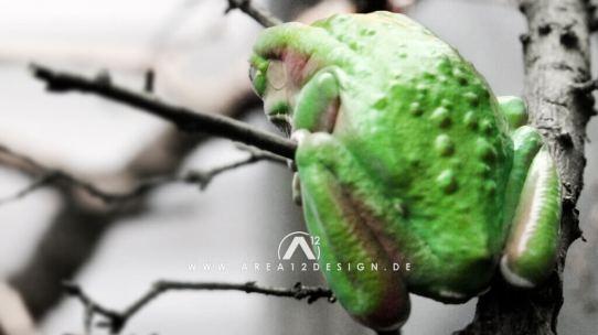 area12design_animals_frog_20072-1024x576