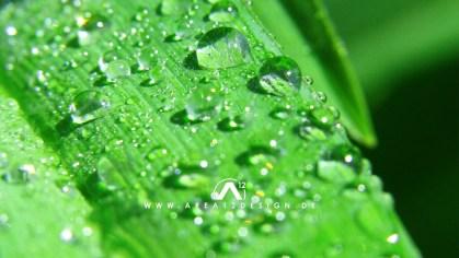 area12design_raindrops220_07-1024x576