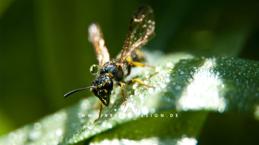 area12design_wasp_2011-1024x576