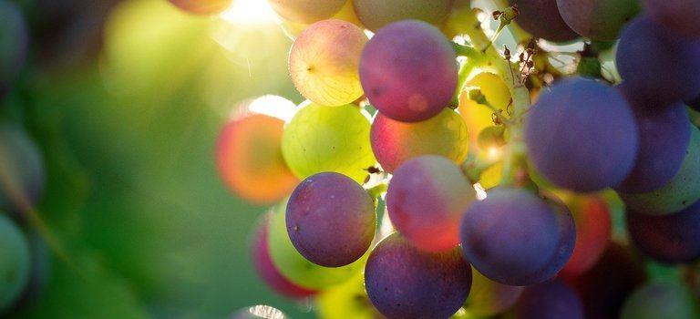 Още за производството на виното – любимец на всички