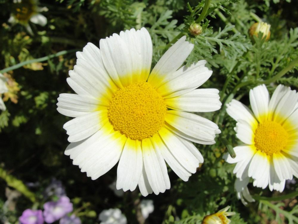 Flowers, flowers everywhere....... (6/6)