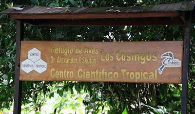 Los Cusingos