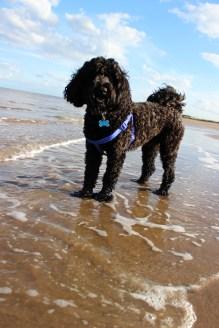 Dog on sea shore