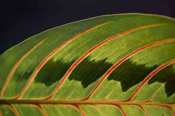 Plant leaves with sensors represent water shortage