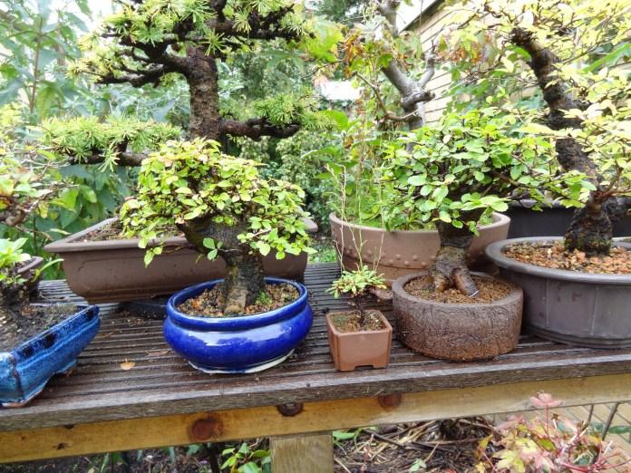 spinonews chinese herbs