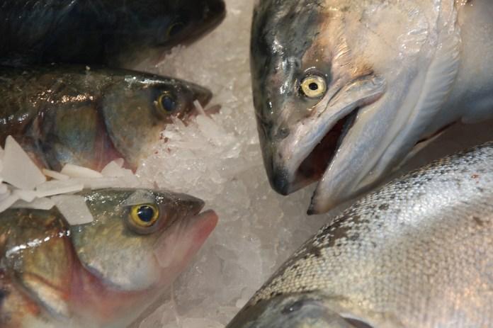 spinonews healthiest fish