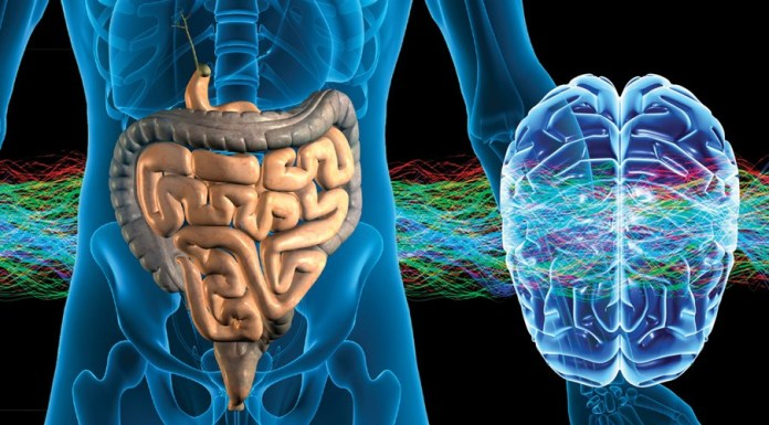 spinonews Enteric nervous system