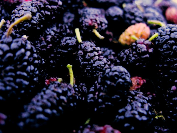 spinonews Benefits of Mulberries
