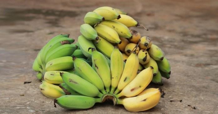 areflect Nino bananas