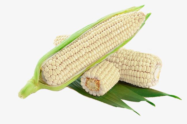 areflect waxy corn