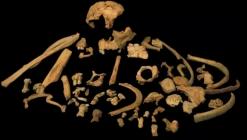 1 milyon yaşındaki insan fosili!
