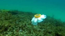 Robot denizanaları göreve hazır!