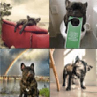 Instagram'ın Ünlü Bulldog'u Manşetlerde