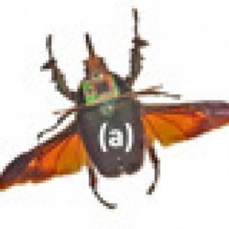 Uzaktan Kumandalı Böcek Ordusu