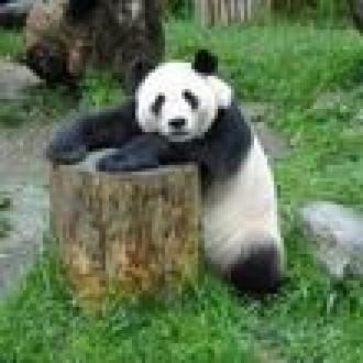Panda Cloud'a Beş Yıldız!