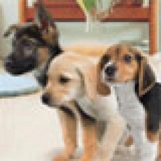 Sanal Köpekler Yarışıyor