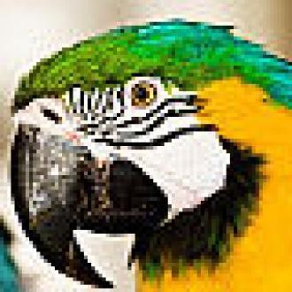 Ücretsiz Photoshop Alternatifi Güncellendi