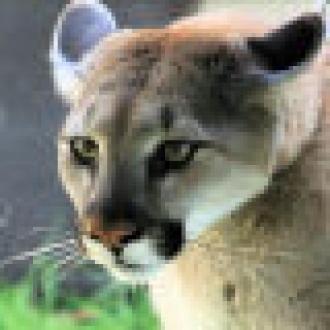 AMD Puma'dan Son Haberler