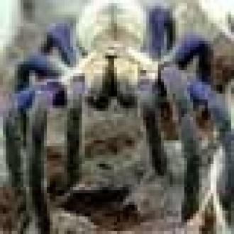 İnternette Sahibinden Satılık Örümcek