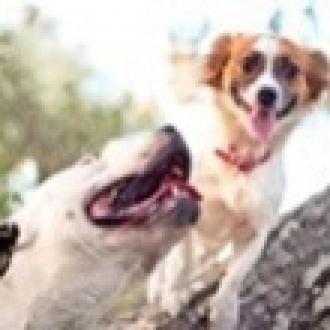 Köpek Severler İçin 5 Instagram Hesabı