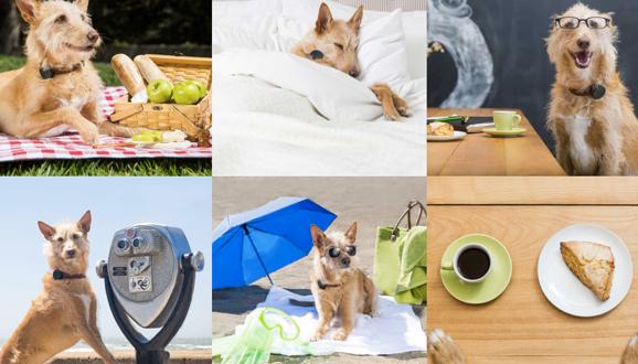 Köpekler İçin Teknolojik Tasma