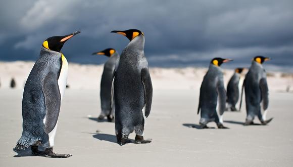 Linux Dünyasının En Önemli 6 İsmi