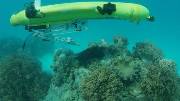 Balık avlayan robot okyanusları temizliyor