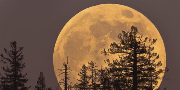 Markaların en iyi Süper Ay paylaşımları