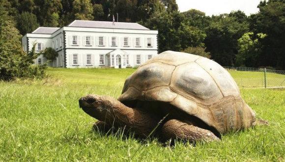 En yaşlı kaplumbağa eşcinsel!