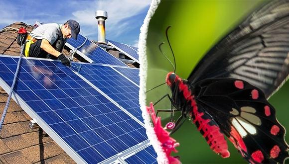Kelebek güneş panelleri için ilham kaynağı oldu!