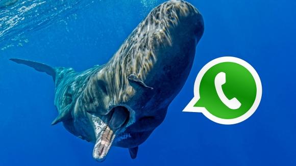 Mavi Balina WhatsApp ile yayılıyor!