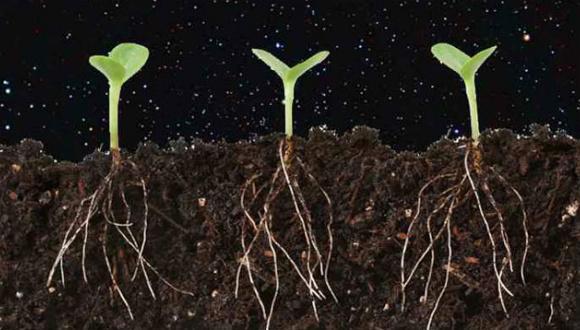 Uzayda bitki yetiştirilecek!