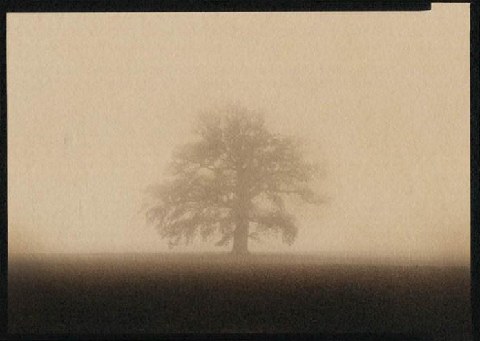 the magic tree 2 light
