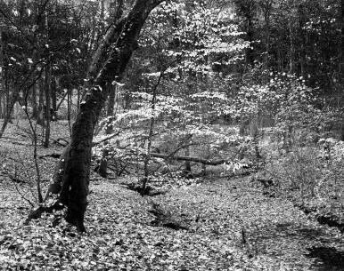 20151104 in the wood031