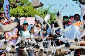 Lâcher de pigeons © C.Rouchaley