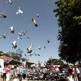 Lâcher de pigeons