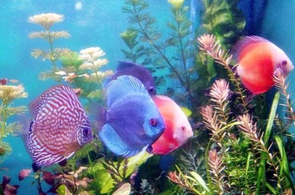 Tips Usaha Ikan Hias Modal Kecil Untung Besar