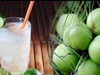 usaha-es-kelapa-muda