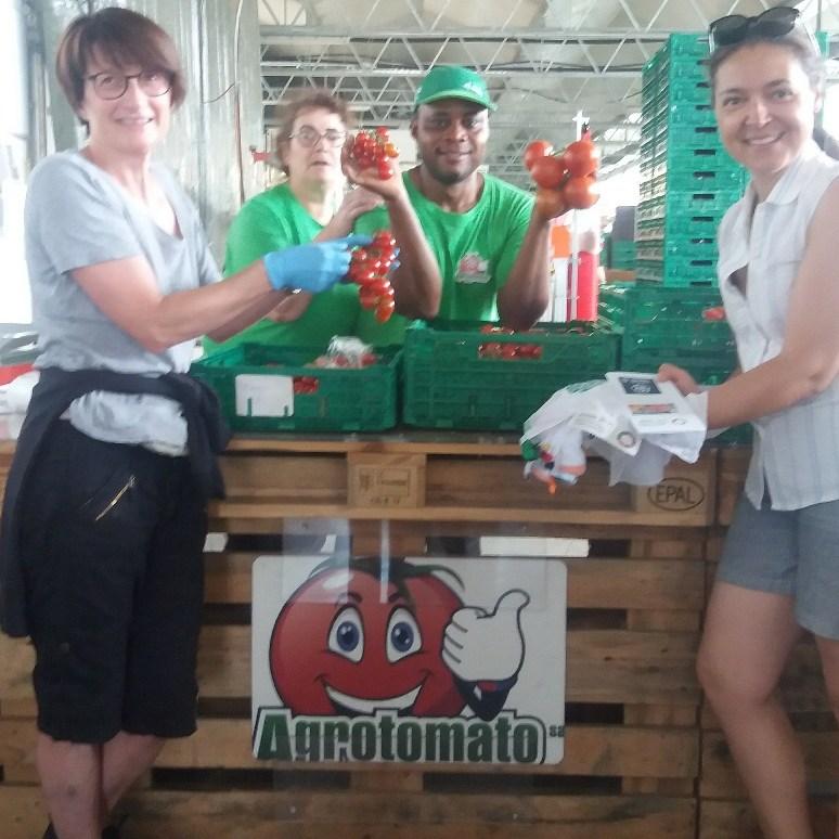 Agrotomato Distrib Sacc 2