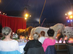 Bizarre and welcome interlude 1: I went with my old-lady charity to a circus in the middle of nowhere for lunch.