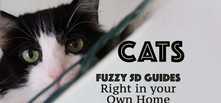 cats are 5d guides video