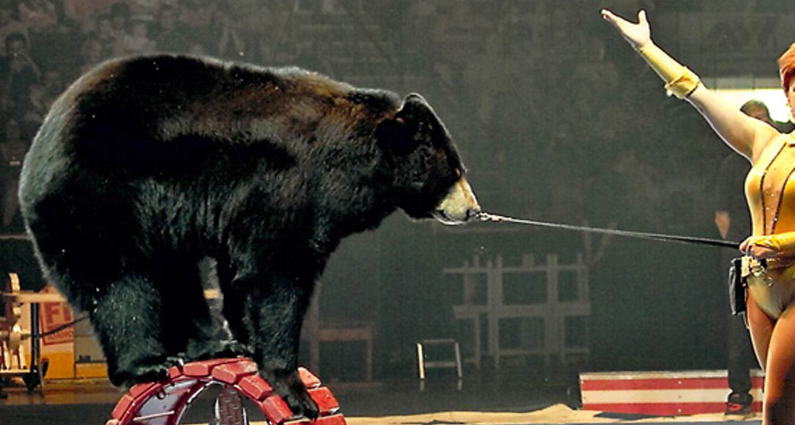Shrine Circus | Animal Rights Foundation of Florida