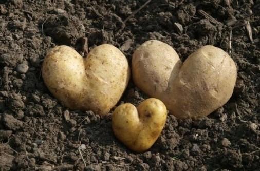 flor-afruta-sem-las-10-frutas-y-verduras-con-aspecto-poco-apetitoso-que-os-van-a-hacer-mas-felices-patatas-corazon
