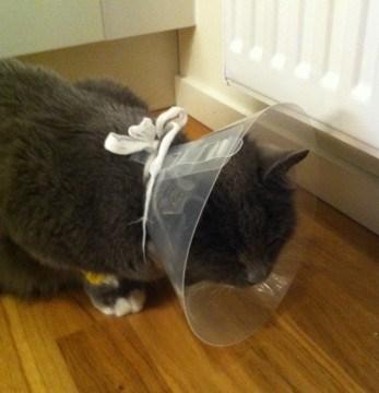 Grå katt med tratt