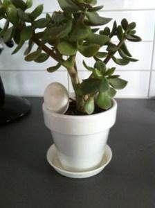 Grön växt med ägg, äggplanta